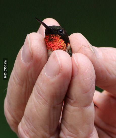 A Neaty tiny ruby throated Hummingbird