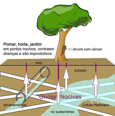 Geobiologia - Pesquisa Google