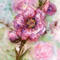 Peach Blossoms Art Prints by Kathleen Marie Pequignot