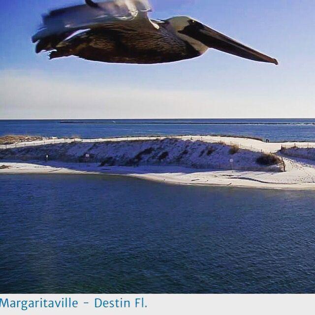 Hardrock casino beach cam showboat casino in atlantic city