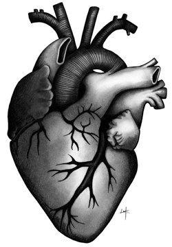 Items similar to ORIGINAL Human Heart Pencil Drawing Hand Signed ...