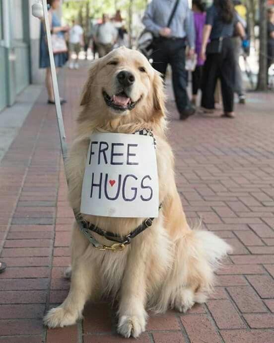 Golden Retriever hugs are the best