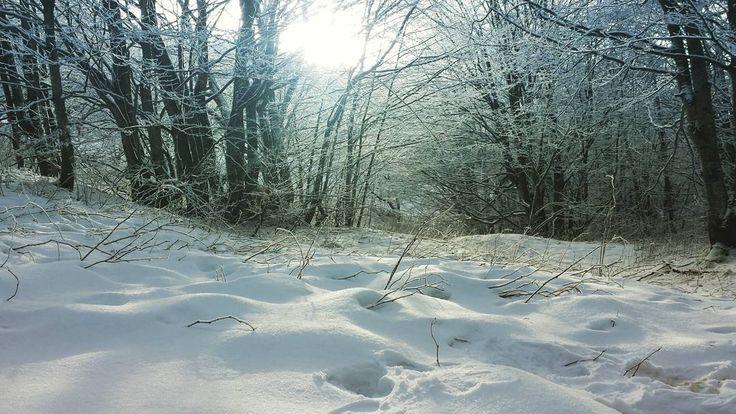 L'alba di un nuovo anno. Auguri in ritardo a tutti!  #neve #snow #instagood #instalike #cimone #buonanno #myshot #fotografia #photooftheday #igers #igerslivorno #inverno #winter #alba #sunset #newyear #2016