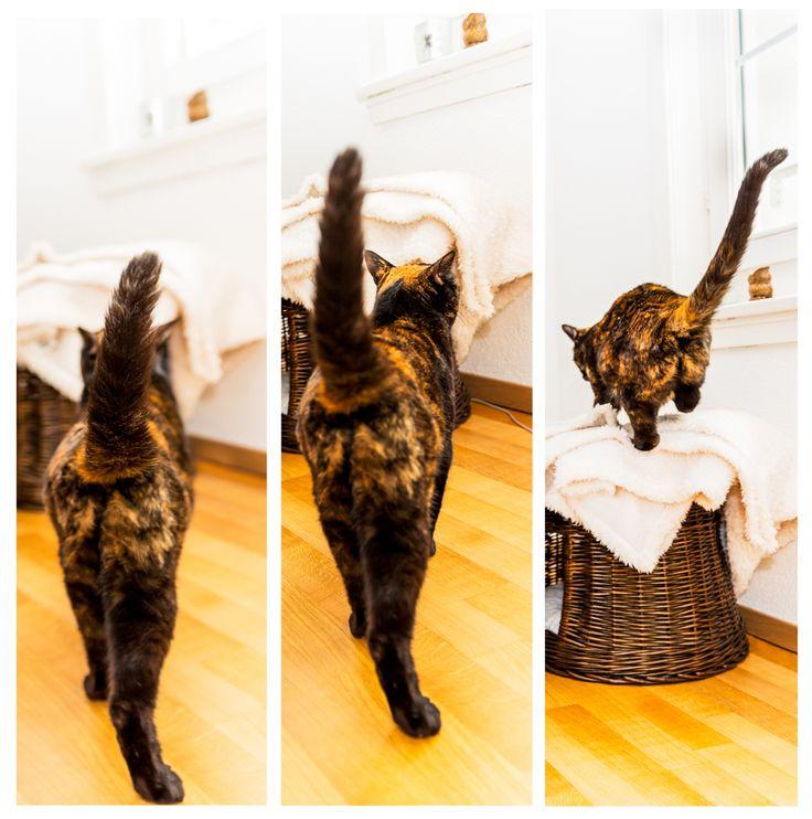 Sweet Mira | Custom Pet Photography, Zurich, Massgeschneiderte Tierfotografie, Cats, Katzen, Tierfotografie