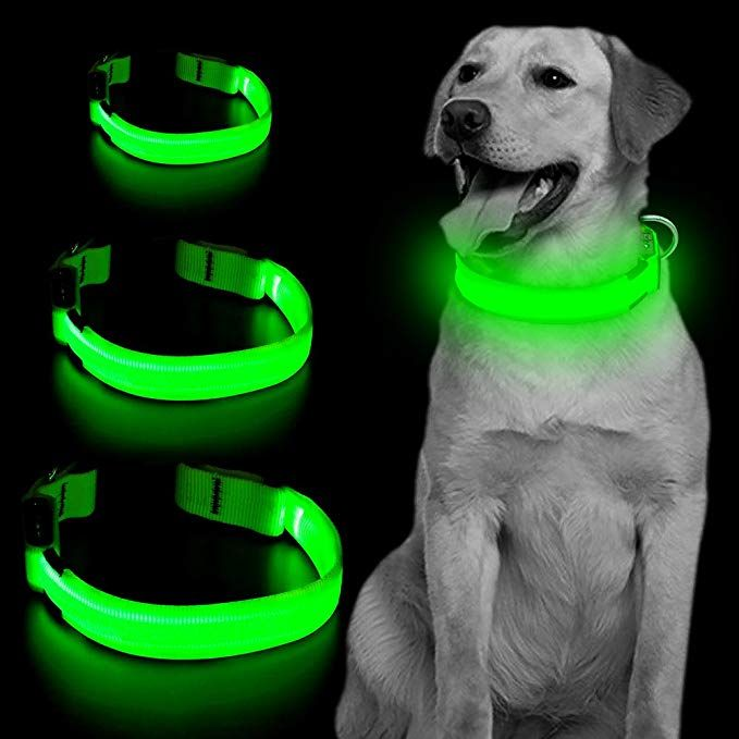 Amazon Com Vizpet Led Dog Collar Usb Rechargeable Blinking Safety Pet Collar Perfect For Matching Leash Harness For Led Dog Collar Dog Leads Pet Collars