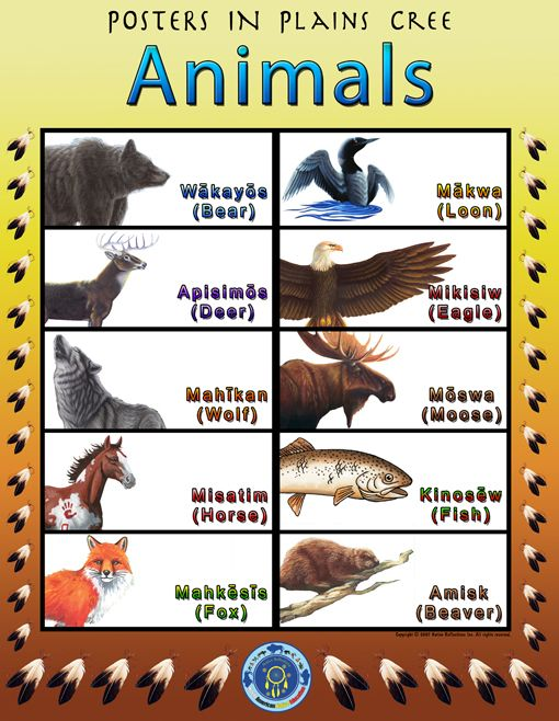 cree language poster | plains cree posters add native language posters to your lesson plan ...