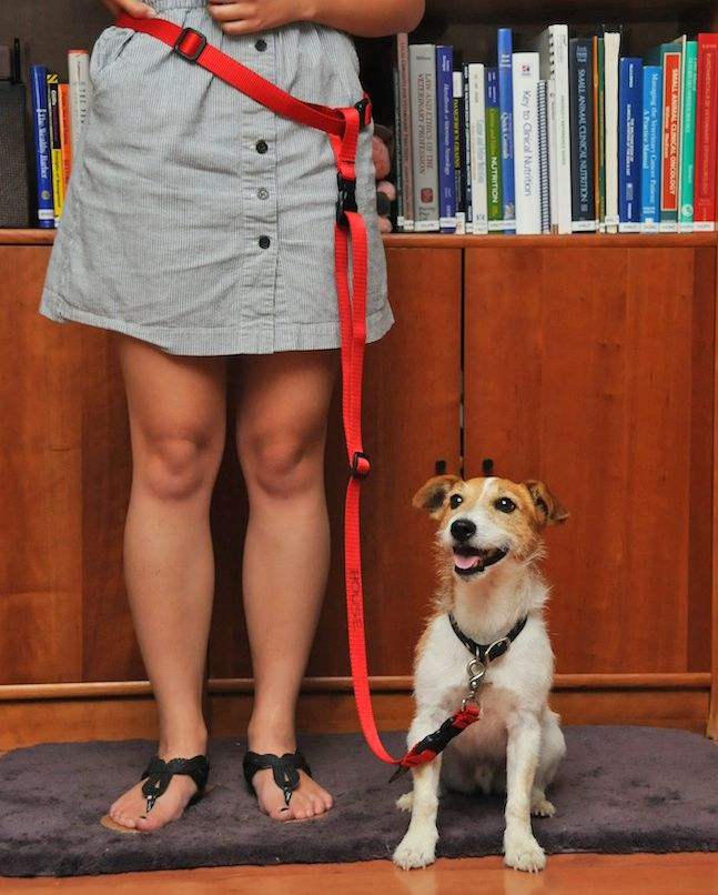 7 Things All Dogs Need | Animal Behavior and Medicine Blog | Dr. Sophia Yin, DVM, MS