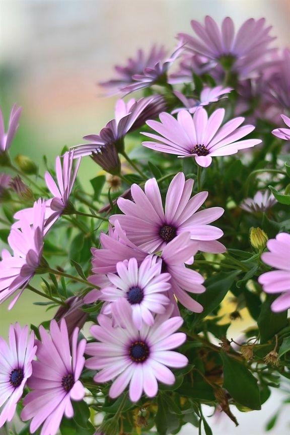 Gardening Hamper 313 20190521140946 53 Landscape Gardening North East Hot Bed Gardening Temper Organic Horticulture Container Gardening Organic Gardening