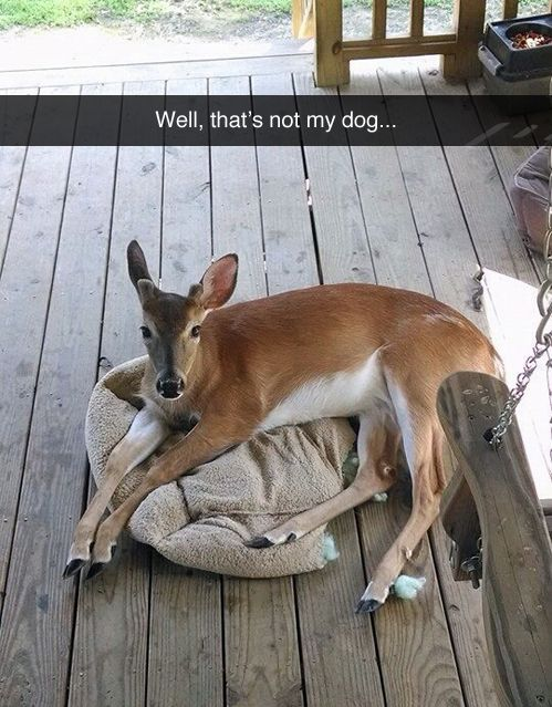 Well, that's not my dog