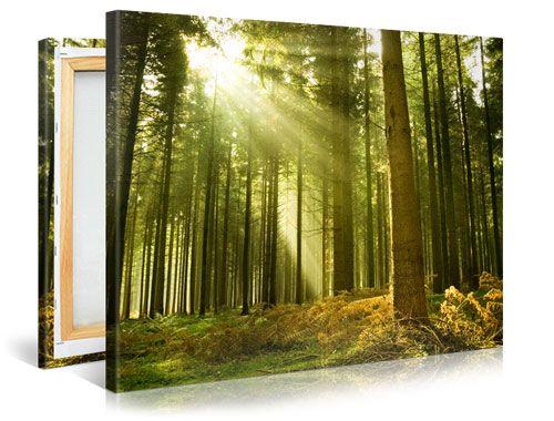 Uw Mooiste Foto op Canvas Topkwaliteit direct van de producent!