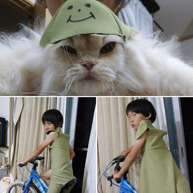 連稿失礼します😅  これ、車の防水?シートのカバーなんです😂 ホップの帽子あご紐つけて、出来上がりらしいです😂とても嫌がってます。 長男、次男は余りのもので、羽織を作っています😅  #迷惑そうな猫#手作り#猫の帽子#車の座席のカバー#何故部屋に自転車?#スコティッシュフォールド#愛猫#cat #なすがまま#ひげボサボサ
