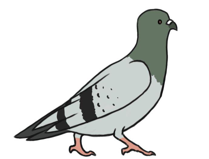 Cute Pigeon Clipart - Google Search