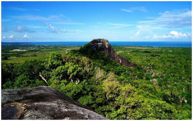 Hutan Adat Belitung TImur