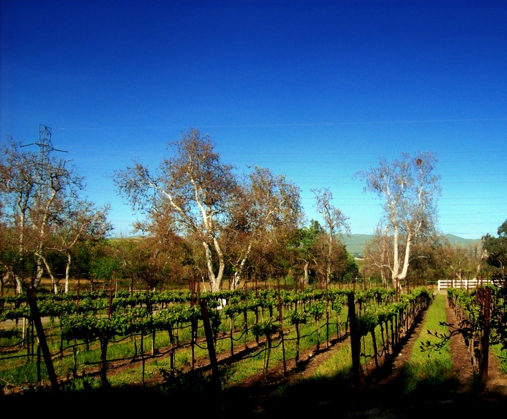 Castro valley vineyard