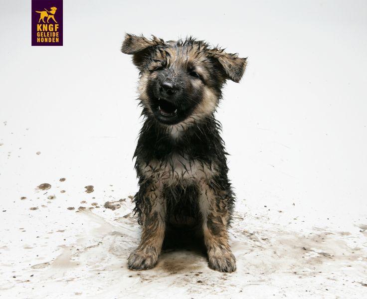 Storm, wind of regen? Niets houdt deze stoere pup tegen!