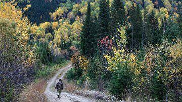 Wild Québec: encountering nature in Canada's backyard