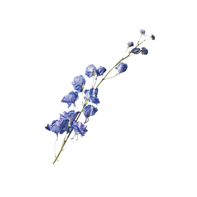 Brides.com: A Glossary of Wedding Flowers by Color. Delphinium. This flower is often used in large ceremony arrangements. It also comes in white, mauve, peach, and other blue shades.  Browse more blue wedding flower ideas.