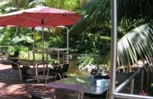 Impact Plants - A great nursery & cafe with delicious food served in a tropical setting