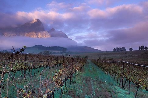Franschoek - South Africa- home to La Clé des Montagnes - 4 luxurious villas on a working wine farm