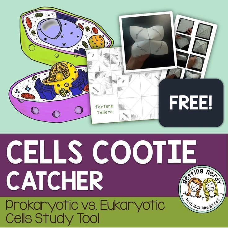 Cells Cootie Catcher {FREE} - Prokaryotic and Eukaryotic Cell Comparison  Students will create an origami study guide filled with 8 questions and answers all about prokaryotic bacteria cells and eukaryotic cells. What kingdoms do they belong to? What is unique about their DNA? How many cells are they made of? What organelles and cell structures do they have? This is a great way to get students interested in studying for a test or understanding the most important concepts of your class.
