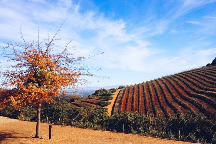 I just spent 5 days eating, drinking and exploring my way through the beautiful Stellenbosch region of the Western Cape, where some of the country's top winemakers and chefs are changing the way South Africans and international visitors alike eat, drink and experience wine and the winelands– in a good way. When I first moved …