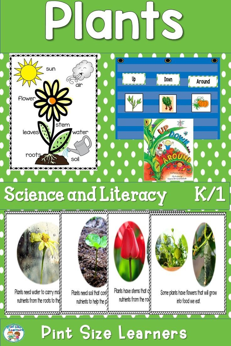 Help Your Kindergarten And First Grade Students Learn The 4 Things A Plant Needs To Grow And How Parts Of A Plant Beginning Of Kindergarten Literacy Activities