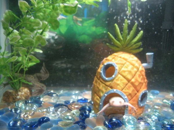 1000 images about aquarium life on pinterest finding for Aquarium decoration ornaments
