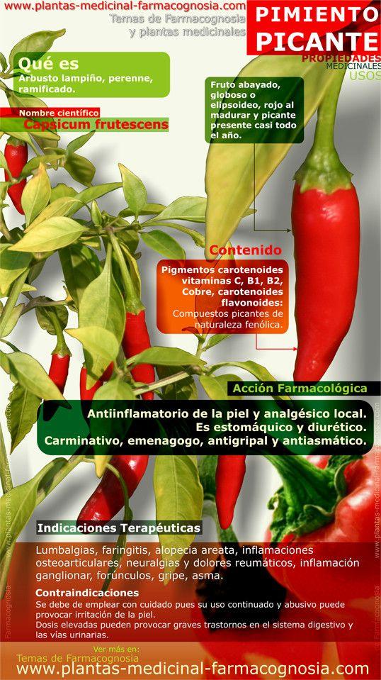 Infografía. Resumen de las características generales del Pimiento picante. Propiedades, beneficios y usos medicinales más comunes del Pimiento picante.