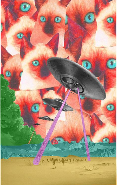 300 best images about psychedelic cats on pinterest