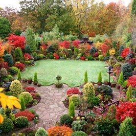 100 ideas to try about Fall Color for the YardTrees and shrubs