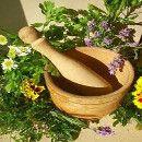 La Saponaria: la planta del jabón | ECOagricultor