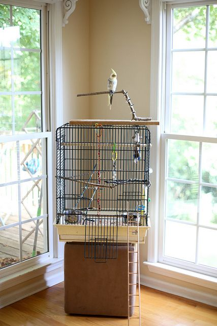 Have a cockatiel or thinking about getting one? Learn from my experience what you will need and how amazing these birds can be. | dreawood.com