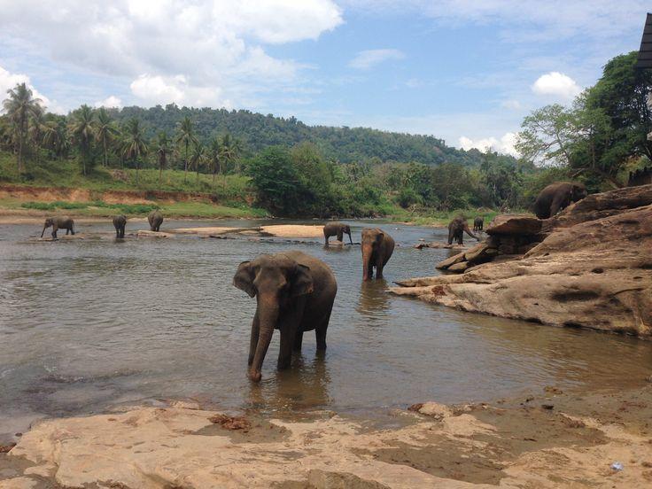 Elefant home