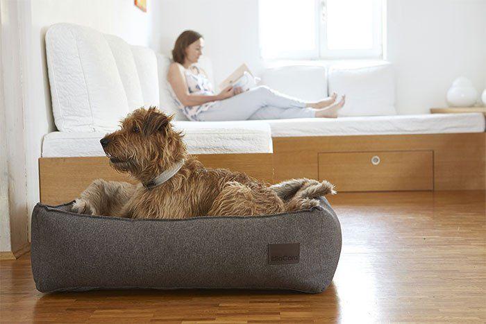 Hundeseng (Brun) - Nube - Petlux
