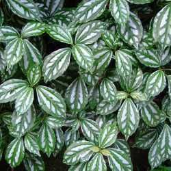plant image thumbnail