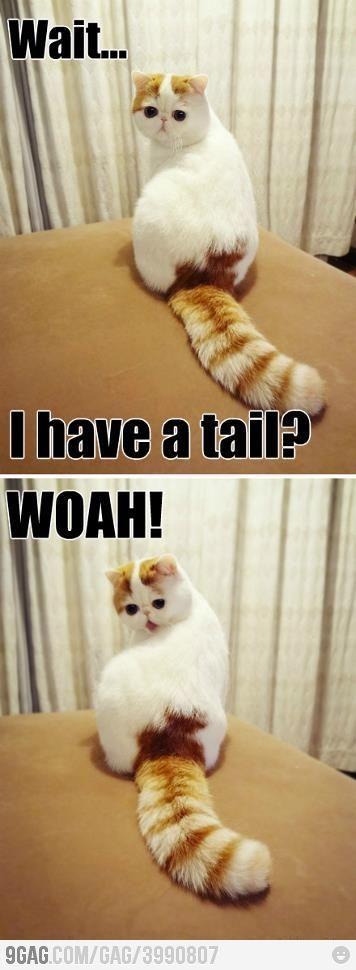 A tail? WOAH!!!