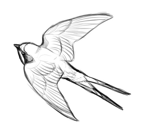 Best 25 Barn Swallow Tattoo Ideas On Pinterest Swallow Tattoo Realistic Bird Tattoo And Barn
