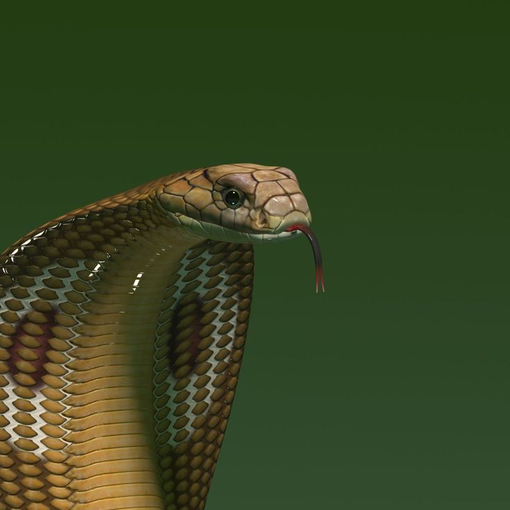 имеет бросок змеи картинки называется прием