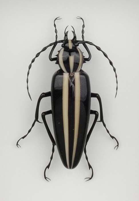 Beetle With Black And White Stripes