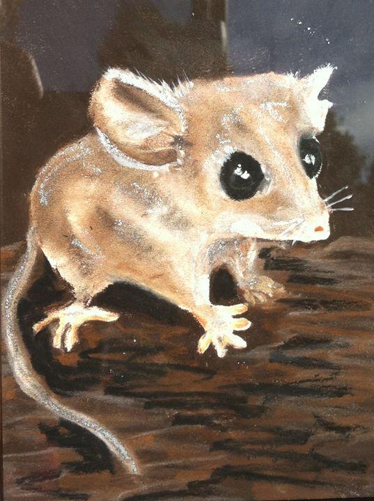 Marsupial Mouse - Andrea Devos