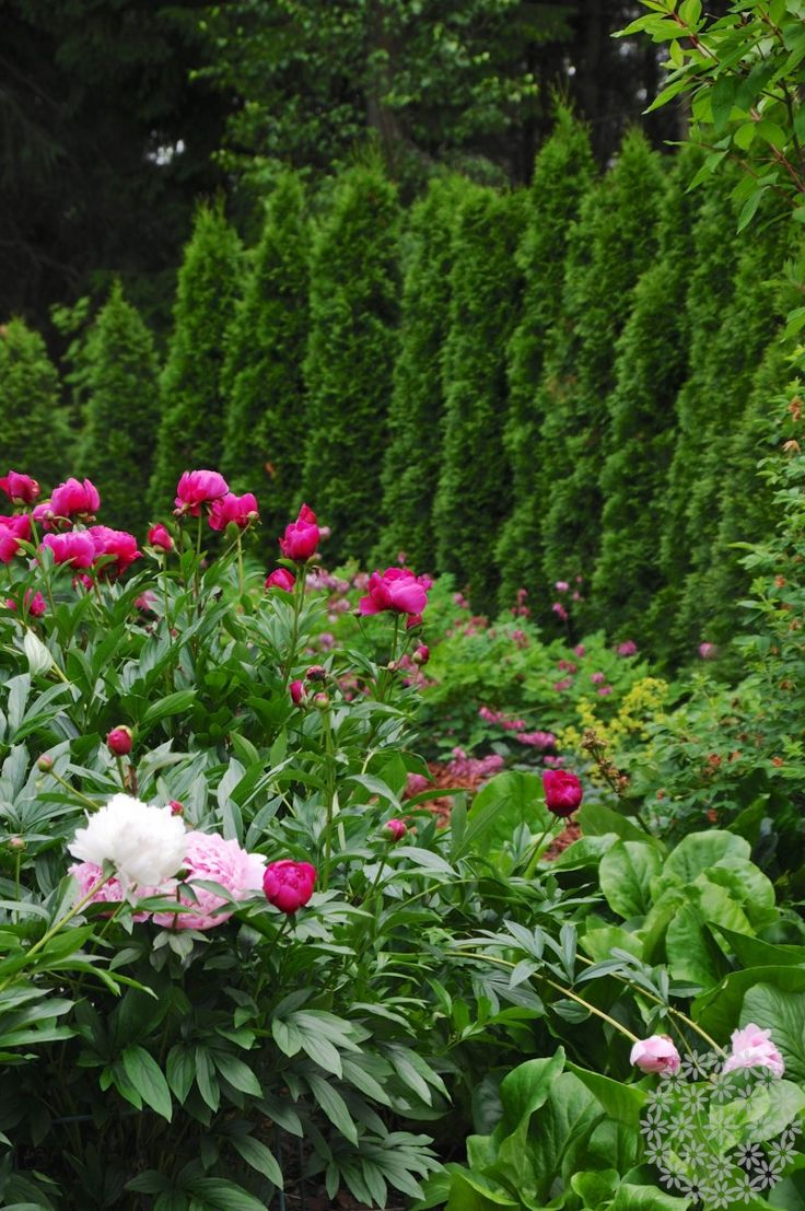 Istutuksia lapsiperheen romanttisessa puutarhassa. http://www.puksipuu.com/green-is-the-new-black-peruskasvit-kunniaan/