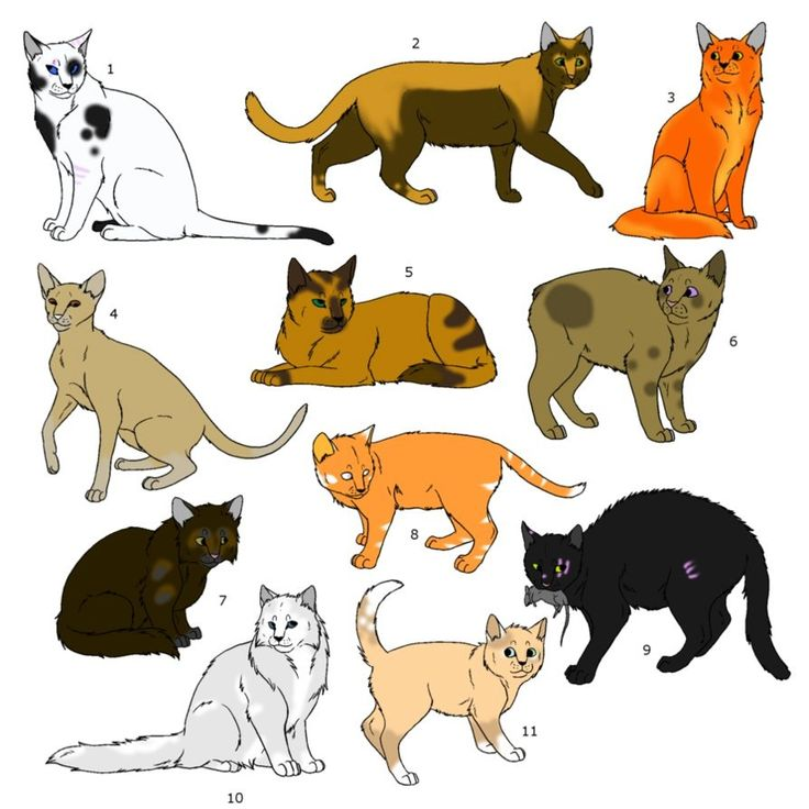 14 Best Warrior Cat Adoptables Images On Pinterest