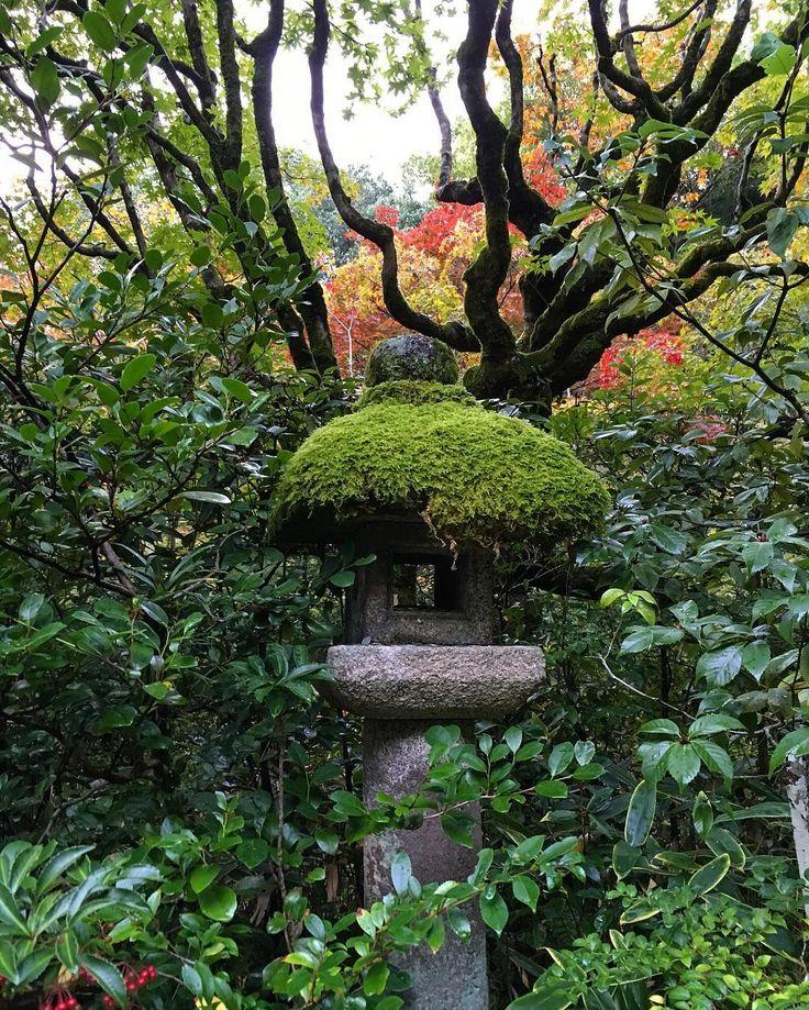 #moss #mossisunderrated #mosslover #whatsthewordforsomeonewholovesmoss #green #lush #kotoin #kyoto #templetime #escapethecity #escapereality #atpeace #japan #travelgram #travelstagram #trees #treelovers #kodama #treehugger