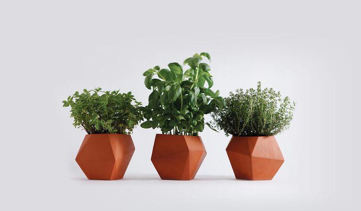 herb / nick fraser: Herb Pots, Herb Planters, Idea, Terracotta Can, Herbs, Garden, Design