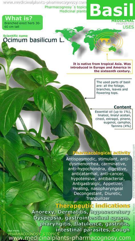 Basil health benefits