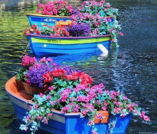 Floating gardens!Colors Flower, Secret Gardens, Water Gardens, Boats, Flower Gardens, Floating Flower, Special Events, Blue Flower, Flower Boxes