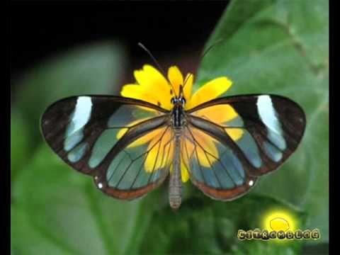 ▶ Pillangók tánca.wmv - YouTube