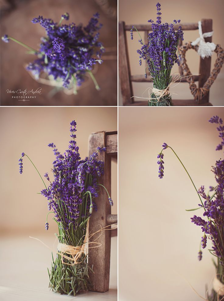 purple, lavender, bunch, csutafoto