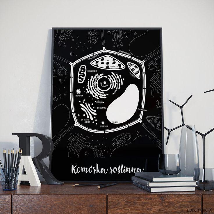 plakaty-Plakat 30x40 cm - Komórka Roślinna