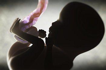 Развитие плода в утробе матери